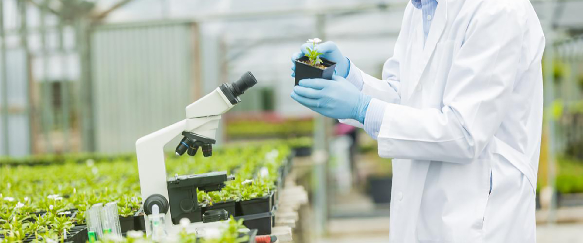 Why is statistics important in Plant Breeding research